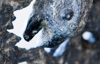 detail of stone sculpture of face of bird