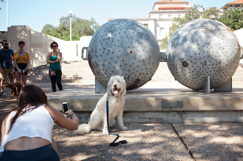 Dog with sculpture