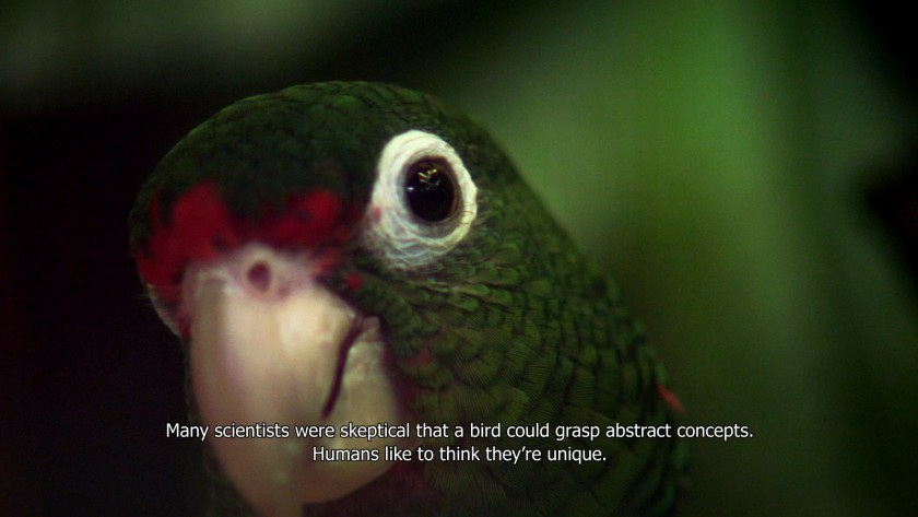 """A still from """"The Great Silence"""" which shows a parrot looking at the camera with a subtitle underneath."""